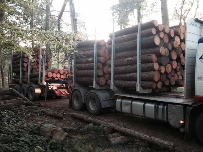 larch fencing timber